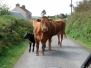 Ireland 2011 Dingle countryside